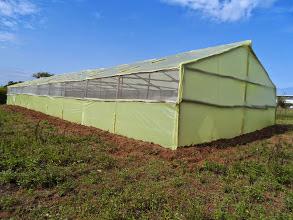 wooden greenhouse company in  kenya