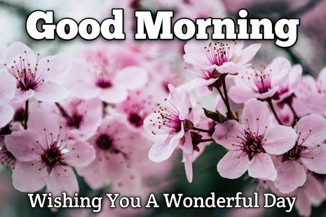 Good Morning Ji  Wishes.