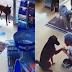 Cadela entra em farmácia e mostra pata machucada