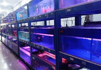 Jual ikan hias murah Tangerang