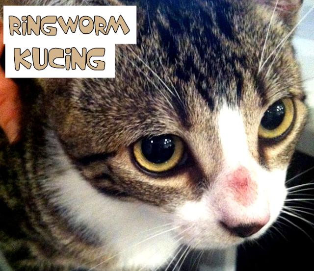 Ringworm Kucing Obat