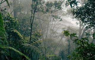 Hutan Paloh terangker
