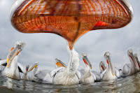 Wildlife Photographer of the Year uccelli marini