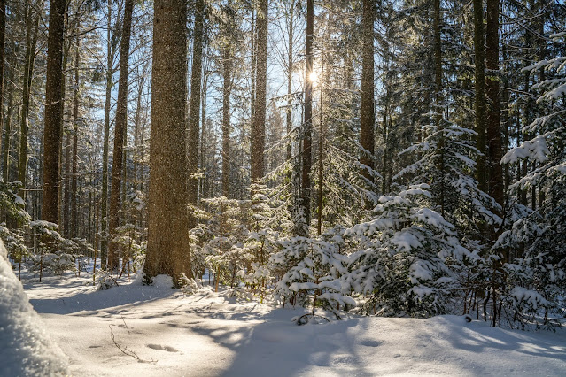 Rundweg Felswandergebiet  Wandern im Nationalpark Bayerischer Wald 03