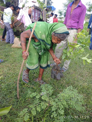 An old woman plants fruit tree saplings in India