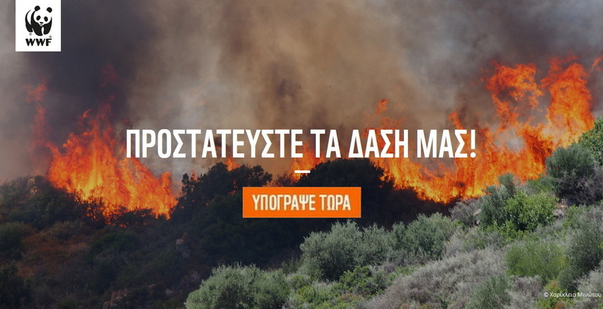 Το WWF ξεκινά μια μεγάλη μάχη για να σώσουμε τα δάση μας! Σε αυτή τη μάχη σε χρειάζεται δίπλα του! Ας ενώσουμε όλοι μαζί τις φωνές μας: Πρόληψη τώρα!