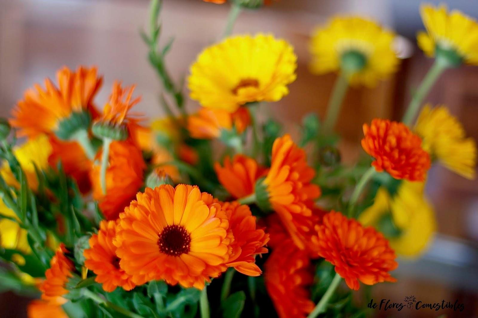 Flor caléndula | De flores comestibles