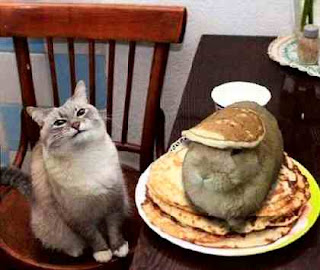 Cat has hare for dinner
