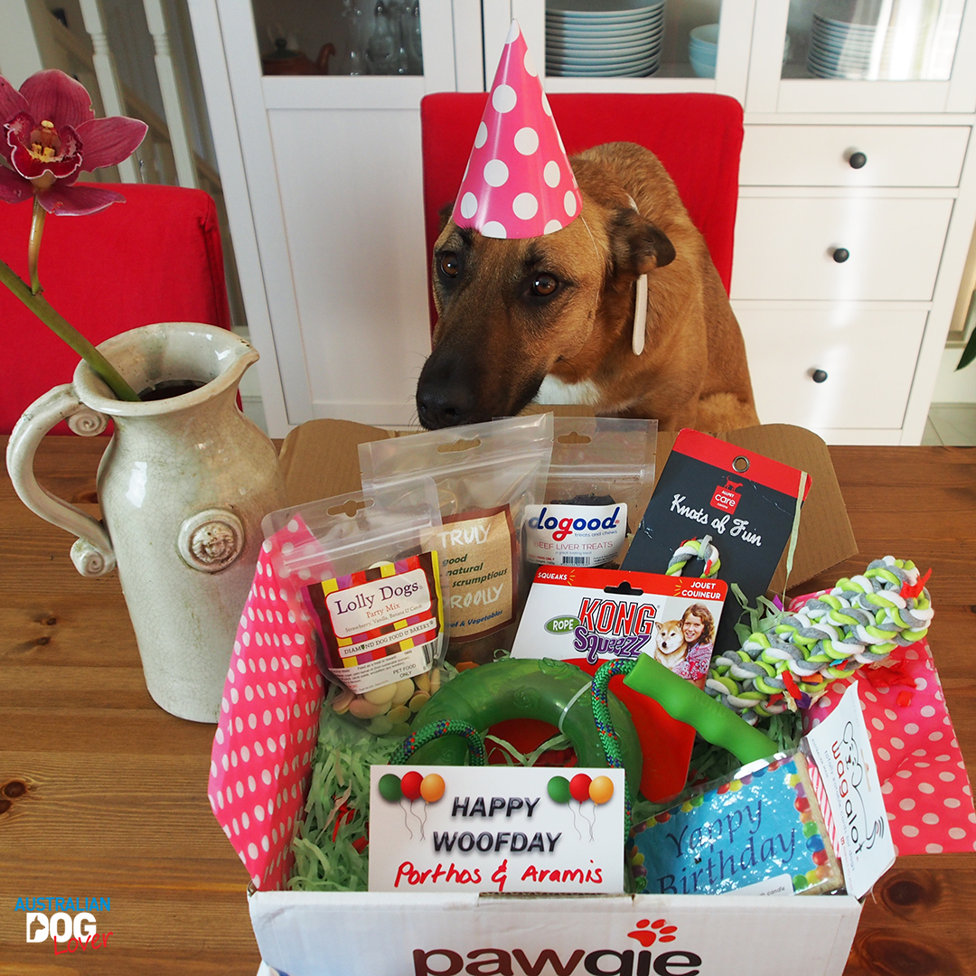 Pawgie Birthday Gift Box For Dogs