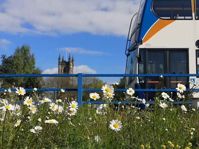 Campo de margaridas, a beira de uma estrada, onde se vê a frente de um ônibus entrando em quadro