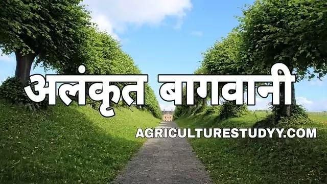 अलंकृत बागवानी किसे कहते है इसका महत्व एवं अलंकृत उद्यानों के प्रारूप, भारत में अलंकृत बागवानी का महत्व एवं भविष्य, अलंकृत बागवानी की वर्तमान स्थिति,