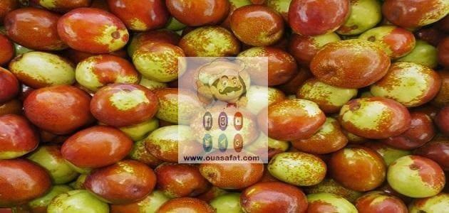 فوائد واستخدامات فاكهة العناب الجزأ الأول