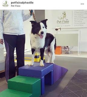 fisioterapia em cães com distensão muscular