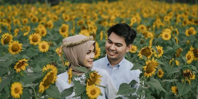Bisa Menjadi spot Foto Prewedding di kebun bunga matahari kediri