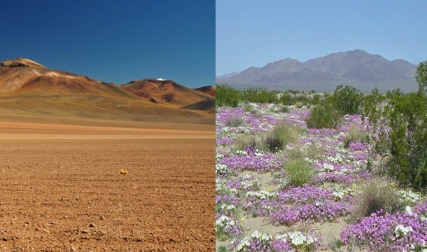 These 20 Unbelievable Pictures Might Look Like An Illusion But They Are Absolutely Real - Flowering Desert