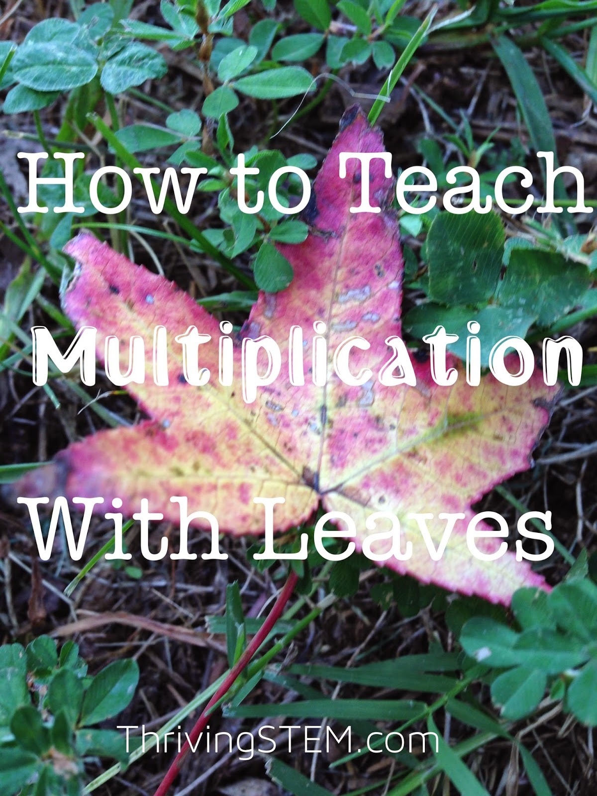 A fun approach to practicing multiplication using leaves