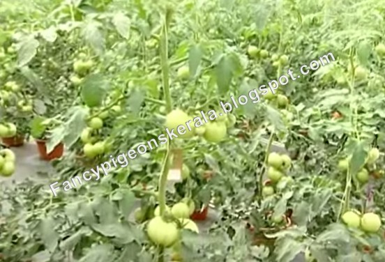 Create and develop successful businesses through farm for Terrace vegetable garden ideas in tamil