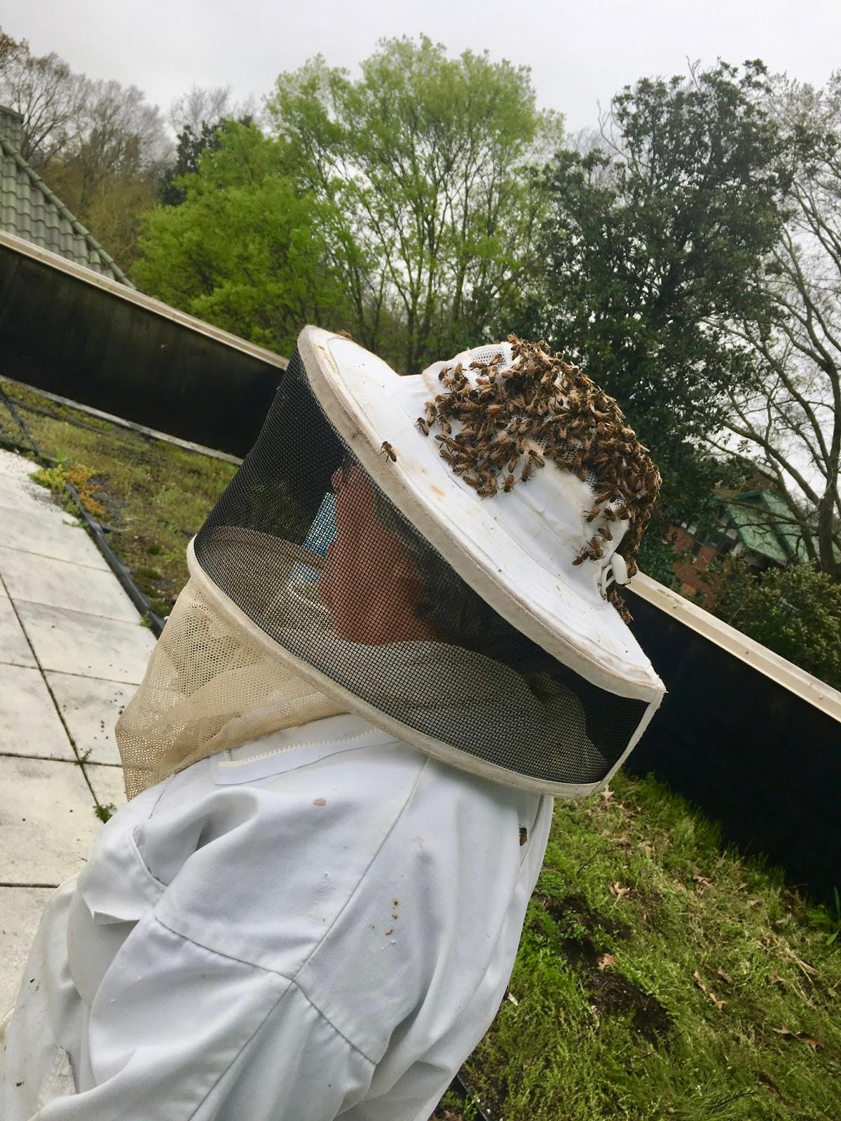 Linda S Bees