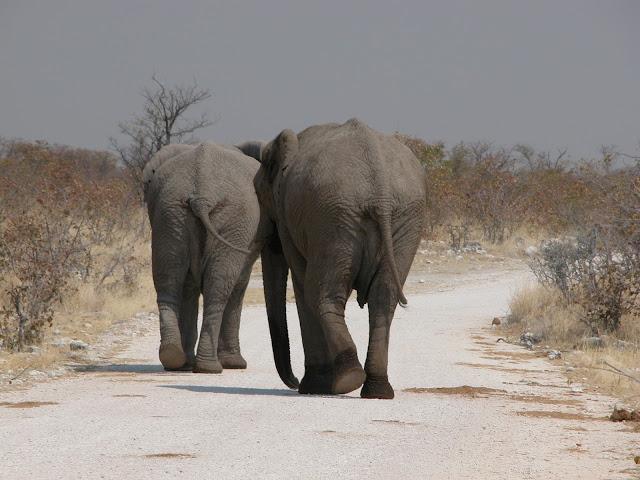 Etosha Nationalpark Elefanten