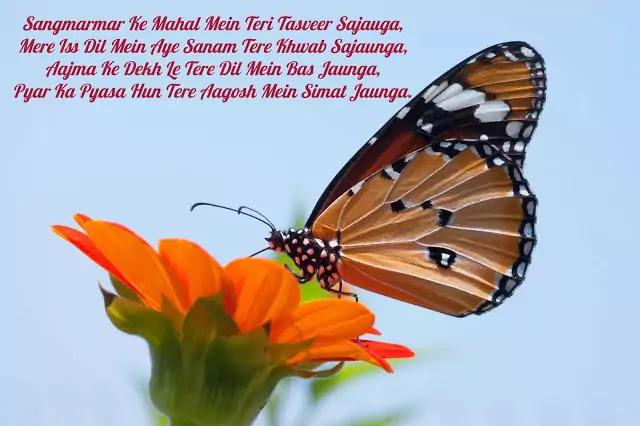 shayari hd image free download