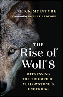 The Rise of Wolf 8 (book cover)