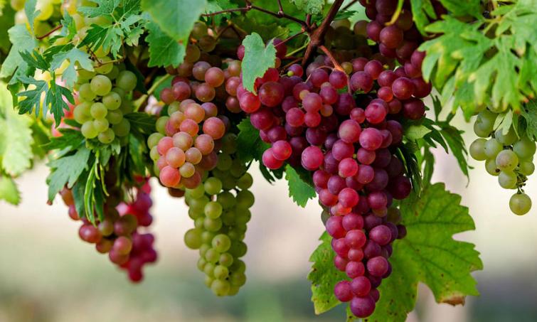 Inilah Buah-buahan dalam Surga yang Tidak Ada di Dunia