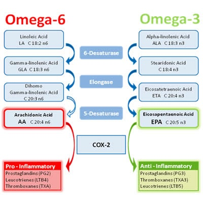 Dr Christopher Bray Md Phd Omega 3 In Plants