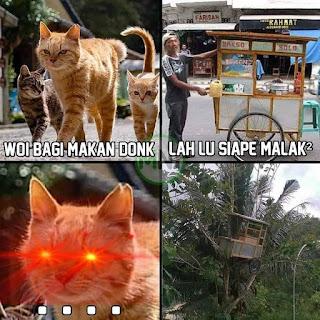 Foto kucing oren barbar