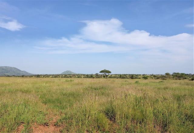 savana Tanzania
