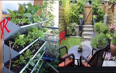 Tanaman herbal – Memanfaatkan pekarangan rumah | Bagian 2