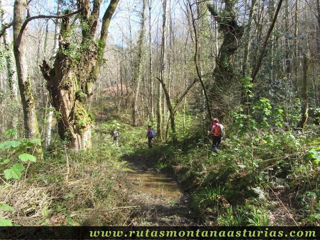 Pista y barro en el bosque