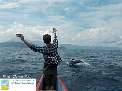 Serunya Tour Lumba-lumba Teluk Kiluan eloratour
