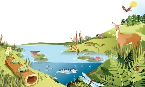 ارسم  وحدد  ارسم نظاما بيئيا، وحدد عليه العوامل الحيوية والعوامل الالحيوية، وصف ثلاث علاقات بين مخلوقات حية تعيش في هذا النظام البيئي.