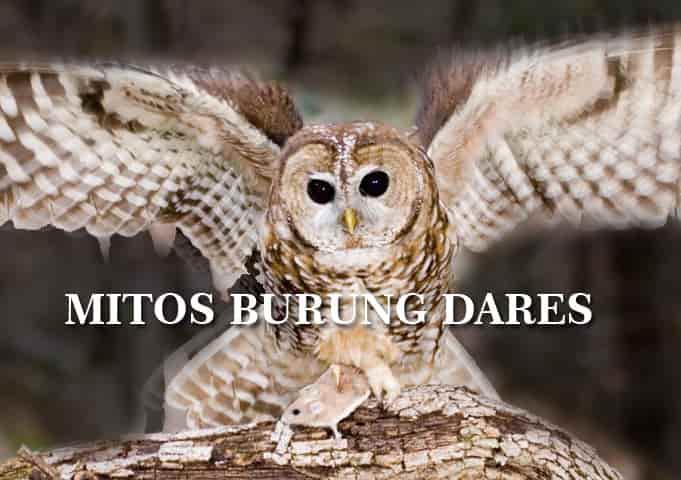 Mitos Burung Hantu