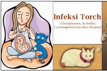 Penyakit Toxoplasma pada Ibu Hamil