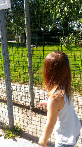 Parc animalier et Jardin du Moulin Neuf Ploudalmezau