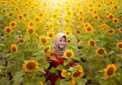Bermanja bersama dengan bunga matahari di Dewari Park