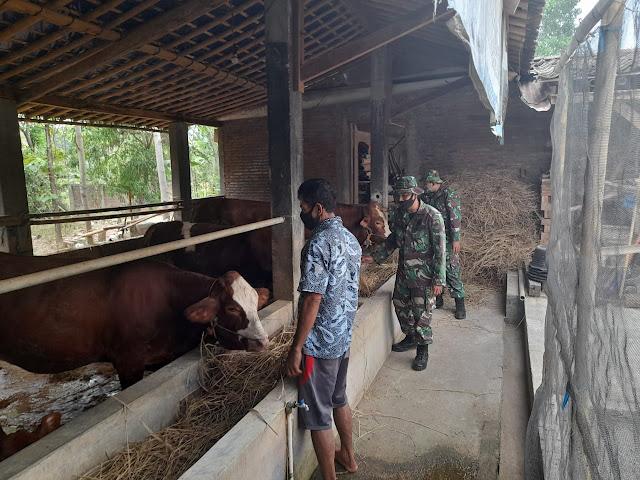 Warga Manfaatkan Sisa Pertanian Untuk Pakan Ternak