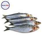 Ikan Dencis 500 Gram