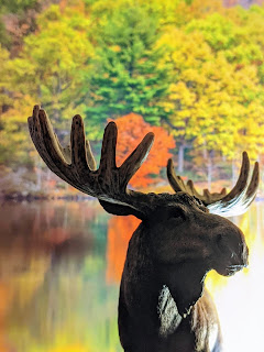 Moose In The Autumnal Loughborough Wilderness