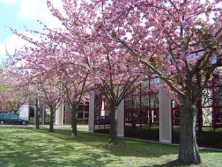 Centre de Formation Business Class Language Solutions anglais cergy paris
