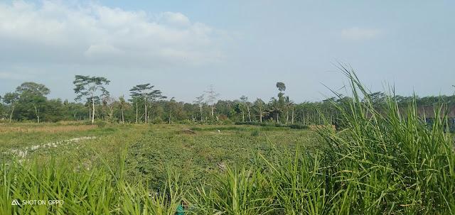 Jual Tanah Sangat Subur Di Slorok Garum