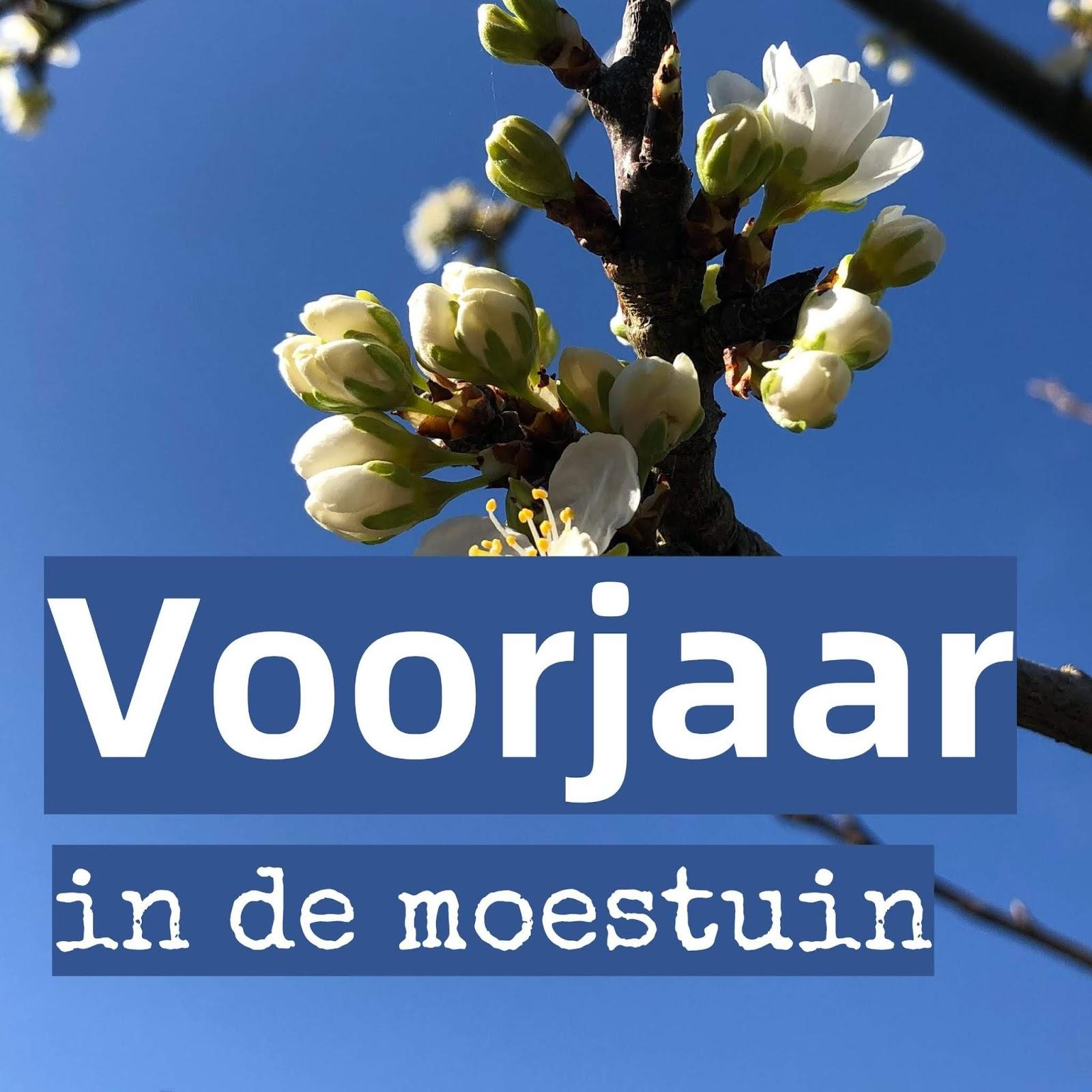 voorjaar lente moestuin volkstuin bloesem