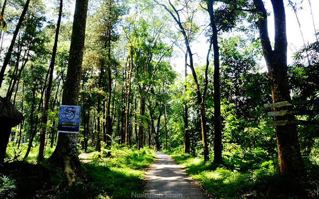 Jalan aspal di Hutan Pinus Ledok Ombo, Poncokusumo