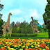 Paket Wisata Taman Bunga Nusantara