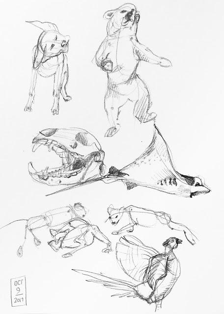 Daily Art 10-09-17 gesture studies of animals