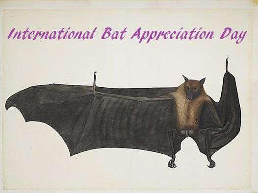 International Bat Appreciation Day Wishes for Instagram