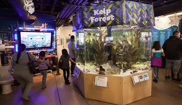 Santa Mônica Píer Aquarium com criança em Santa Mônica