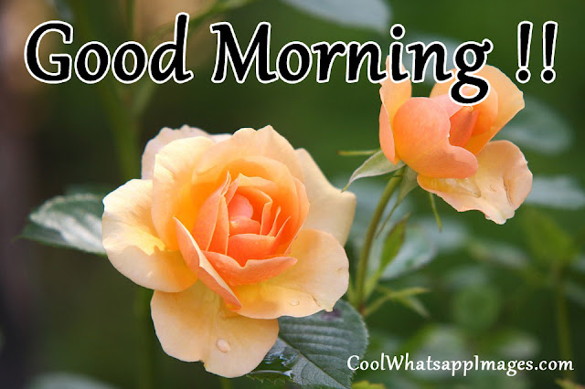 Good Morning with Roses