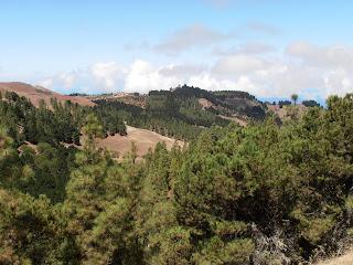 vista de los pinos a lo lejos